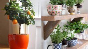Horta em Apartamento Dicas e Curiosidades